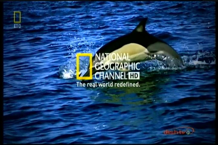 National Geographic hd Logo National Geographic Channel hd