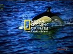 NSS 6 at 95.0 e-Indian footprint-packet Dish TV-12 647 V National Geographic Channel HD Asia-11